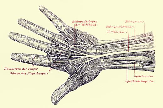 Anatomische Skizze einer Hand