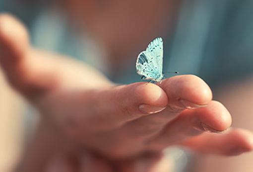 Schmetterling sitzt am Finger